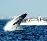 San Juan Safaris Whale Watch & Wildlife Tours