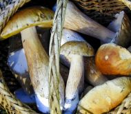 Wild Mushroom Celebration