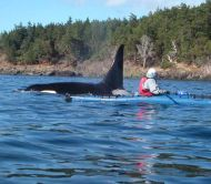 Discovery Sea Kayak