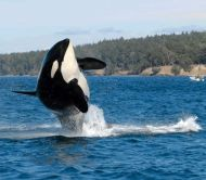 The Whale Museums 2017 Summer Lecture Series