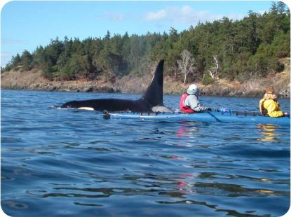 Whale Watching and Kayak Tours